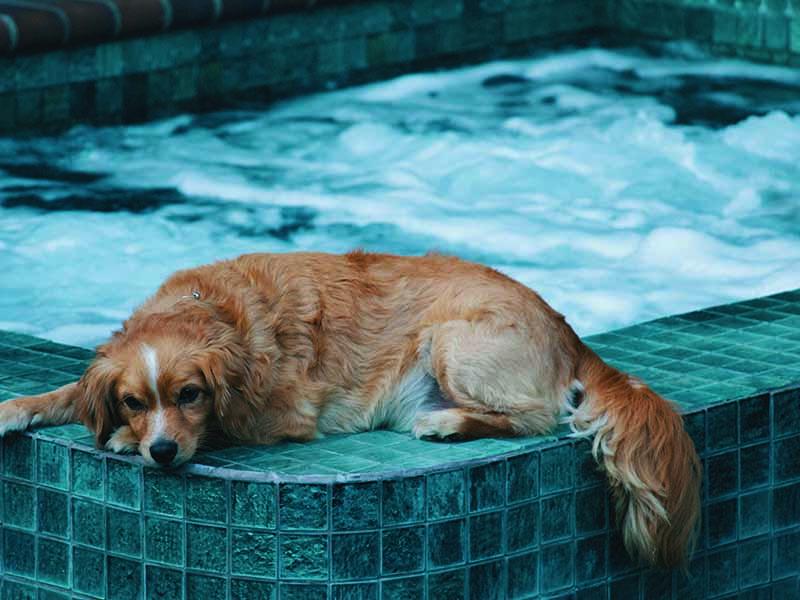 Legislación de piscinas de uso privado